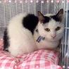 うさぎ子猫 エレンくん 8ヶ月
