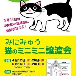 猫の「ミニミニ譲渡会」開催します!