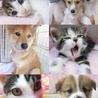 犬猫救済の輪(保護活動者)