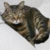猫のミーナ(保護活動者)