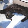 珍しい黒トラくんセンターから保護 猫初めてok