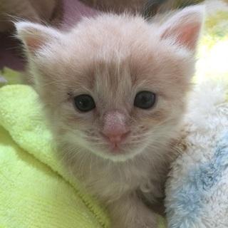 ミルク飲み猫5兄妹、地域限定で里親募集〈条件必読〉