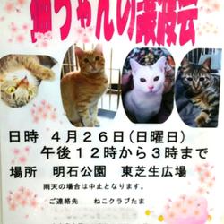 4/26(日)明石公園譲渡会