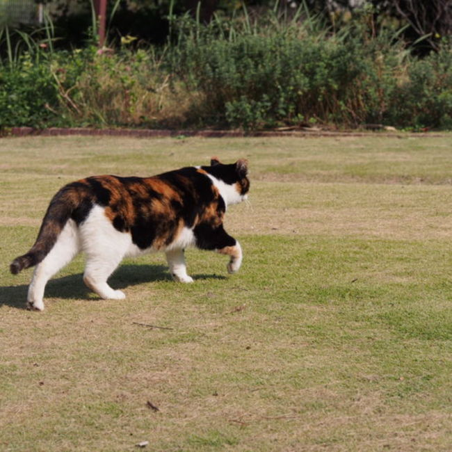 Cat&Community ちたのカバー写真