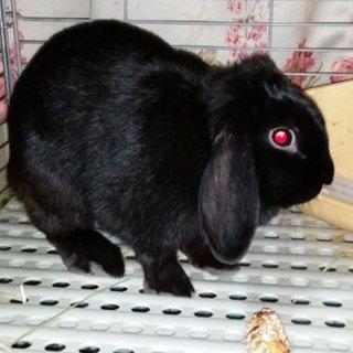 メスのウサギです
