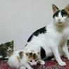 生後1ヶ月5子猫の内4猫終了/ママ猫+白キジ募集中 サムネイル3