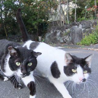 飼い主に捨てられた2匹の猫