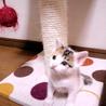 生後1ヶ月5子猫の内4猫終了/ママ猫+白キジ募集中 サムネイル5