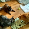 猫宿~neko...(保護活動者)
