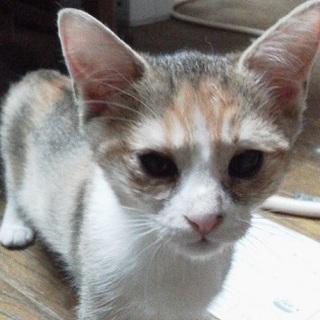 虐待され、遺棄された仔猫 NO、2