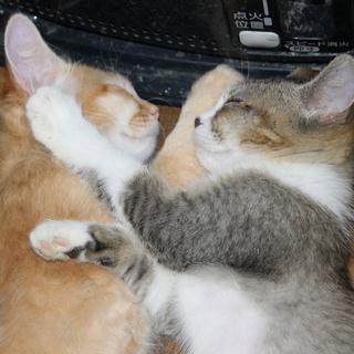 虐待され、遺棄された仔猫 NO、3
