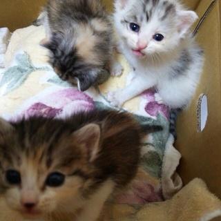 捨てられていた子猫達にあたたかい家族を募集します!