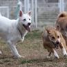 板橋の犬(保護活動者)