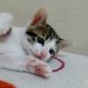 生後1ヶ月5子猫の内4猫終了/ママ猫+白キジ募集中 サムネイル6