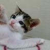 生後1ヶ月5子猫の内4猫終了/ママ猫+白キジ募集中 サムネイル2