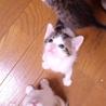 生後1ヶ月5子猫の内4猫終了/ママ猫+白キジ募集中 サムネイル4