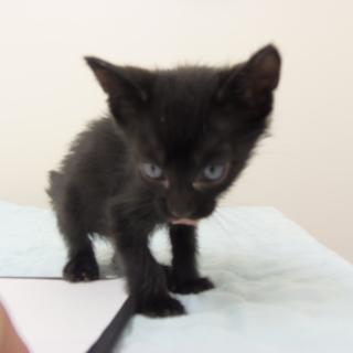 5月8日保護 黒の子猫(個体番号:90)