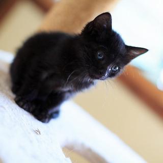 元気で懐こい黒猫くうちゃんと白猫そらちゃん