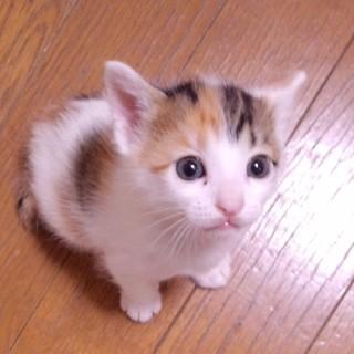 生後1ヶ月5子猫の内4猫終了/ママ猫+白キジ募集中