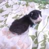 5月7日生まれの可愛い子猫ちゃん
