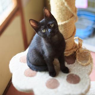 元気で可愛い黒猫うらん