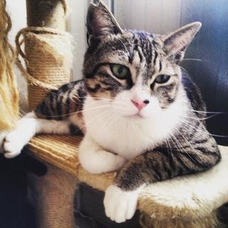 見た目は美猫 怖がり小丸