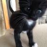 黒子猫男の子