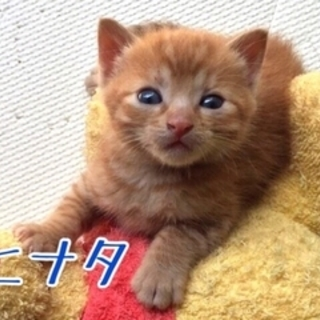 【ヒナタ】MIX・生後1ヶ月・オス