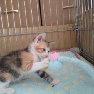 【凪】MIX・生後1ヶ月・メス