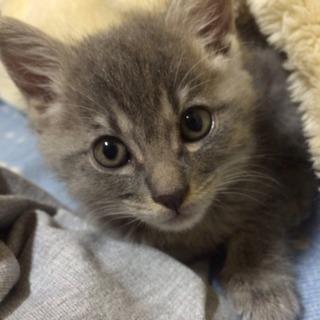 可愛い赤ちゃん猫里親募集