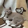 変わった毛色の2ヶ月子猫♂