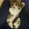 生後2ヶ月!母猫を亡くした子猫!