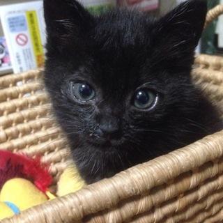 小さい黒猫の里親募集です!!!!!