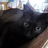 人間大好き馴れ馴れ黒猫のフラン