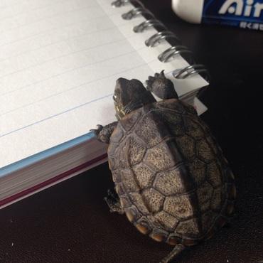 一緒にお勉強