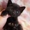 可愛い黒猫のセシリアです。