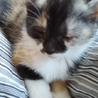 友達の家で生まれた、子猫です!