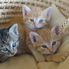 子猫の四兄弟です