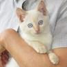 穏やかで人懐こい白猫です