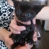★目のきれいな黒猫 女の子★
