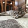 天真爛漫な子猫2ヶ月♪