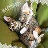 天真爛漫な子猫2ヶ月♪ サムネイル2