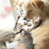 天真爛漫な子猫2ヶ月♪ サムネイル4