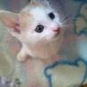 一番賢くしっかり者の子猫3兄妹のひぃちゃんです