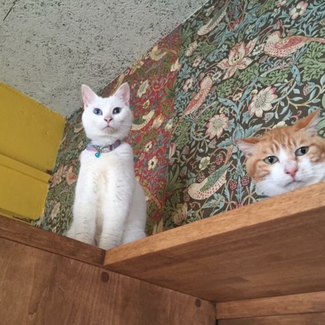 保護猫カフェ ネコリパブリック東京 お茶の水のカバー写真