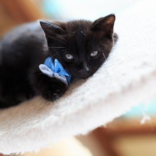 黒猫ぽんちゃん