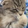 愛猫のキュートなモコちゃんです。