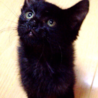 可愛い黒猫の赤ちゃん!