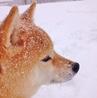 雪と優気(ゆき)