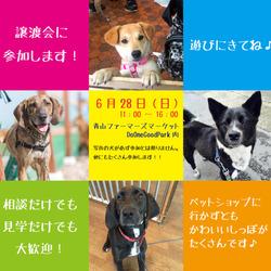 6月28日東京青山にて譲渡会!!